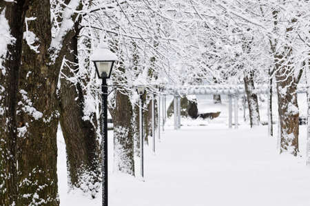 winter road: Lane in winter park with snow covered trees Stock Photo