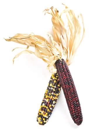 espiga de trigo: Dos mazorcas de ma�z de los ind�genas aislados en el fondo blanco Foto de archivo