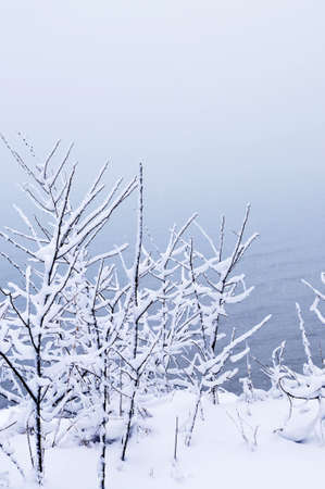 Winter trees covered with fresh snow - natural background Stock Photo - 3564701