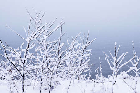 Winter trees covered with fresh snow - natural background Stock Photo - 3564705