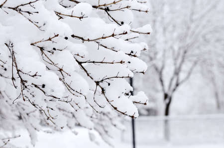 Winter park landscape with snow covered trees Stock Photo - 3564687