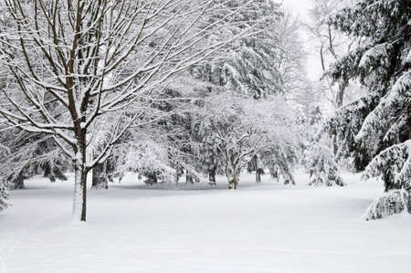 Winter park landscape with snow covered trees Stock Photo - 3564715