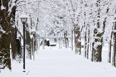 Lane in winter park with snow covered trees Stock Photo - 3564712
