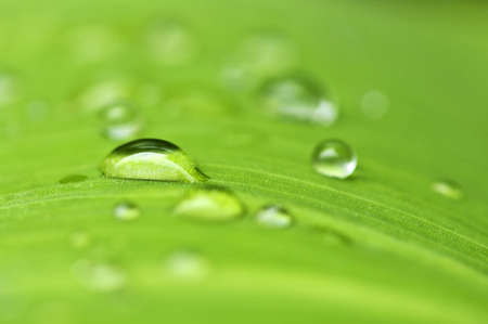 Natural background of green plant leaf with raindrops Stock Photo - 3571916
