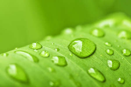 Natural background of green plant leaf with raindrops Stock Photo - 3571920