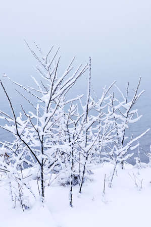 Winter trees covered with fresh snow - natural background Stock Photo - 3571952