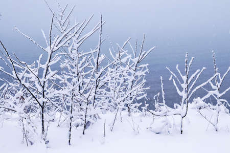 Winter trees covered with fresh snow - natural background Stock Photo - 3571955
