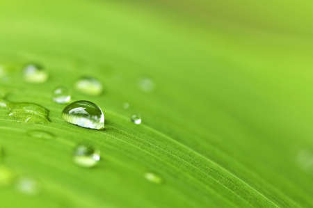 Natural background of green plant leaf with raindrops Stock Photo - 3628528