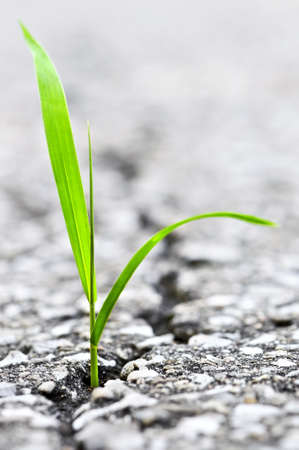 Green grass growing from crack in old asphalt pavement Stock Photo - 3628521