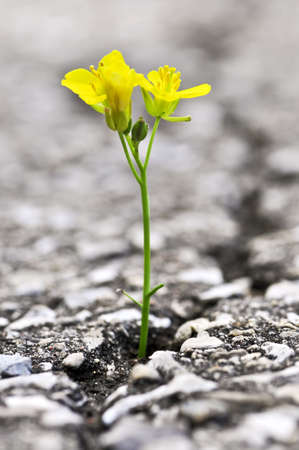 Groen gras groeit uit spleet in oude asfalt bestrating