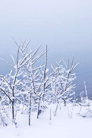 Winter trees covered with fresh snow - natural background Stock Photo - 3628552