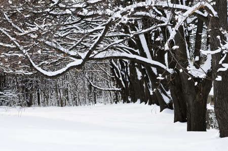 Winter park in Toronto after heavy snowfall photo