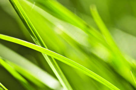 dewy: Natural background of dewy green grass blades close up Stock Photo