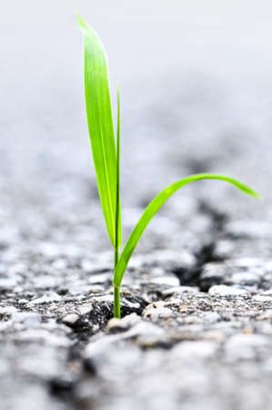 Green grass growing from crack in old asphalt pavement photo