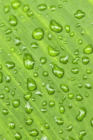 Natural background of green plant leaf with raindrops photo