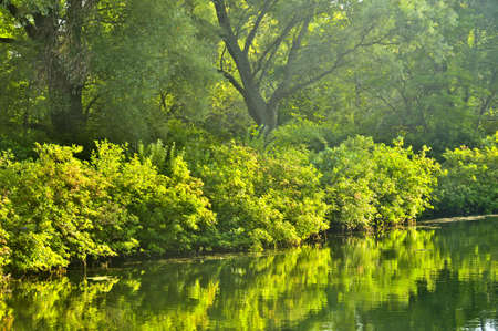 Reflection of green trees in calm water Stock Photo - 3776641