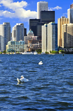 Toronto waterfront with white swans in the harbour photo