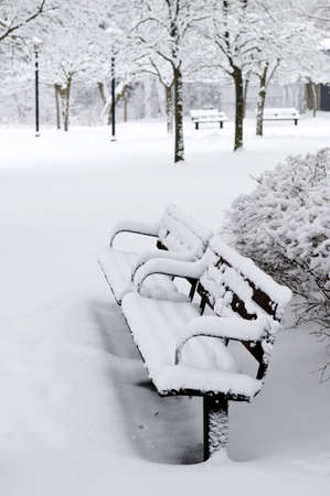 Winter park covered with fresh white snow photo