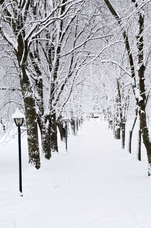 white winter: Lane in winter park with snow covered trees Stock Photo