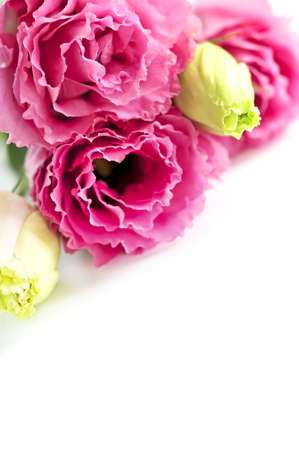 Bouquet of flowers called prairie rose isolated on white background Stock Photo