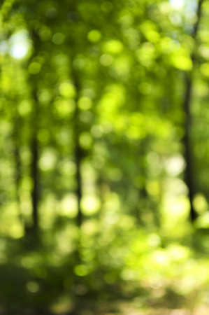 Green natural background of out of focus forest or bokeh Stock Photo - 3942949