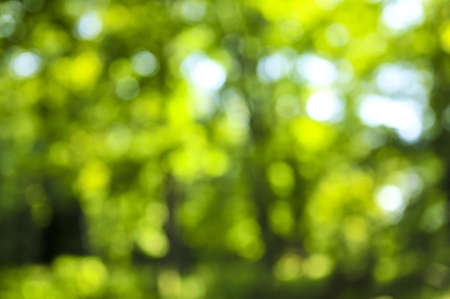 Green natural background of out of focus forest or bokeh photo