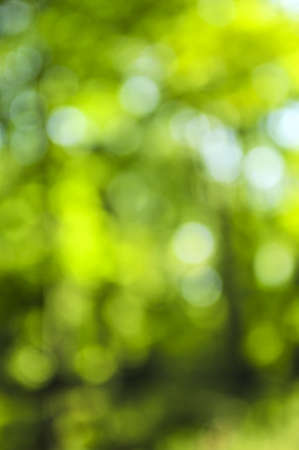 Green natural background of out of focus forest or bokeh Stock Photo - 4015608