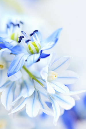 Floral background of first spring flowers close up Stock Photo - 4042315