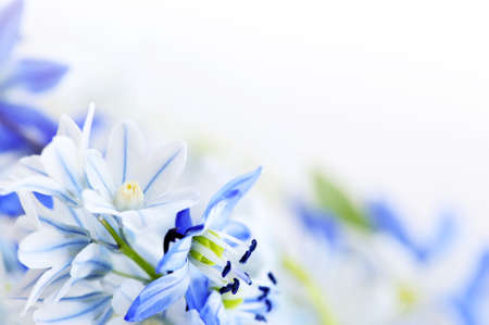 Floral background of first spring flowers close up Stock Photo - 4042281