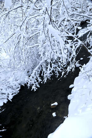 Winter landscape with snow covered trees and river photo