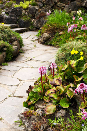 perennials: Spring garden with emerging perennial flowers and plants Stock Photo