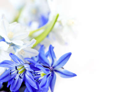 Floral background of first spring flowers close up Stock Photo - 4160292