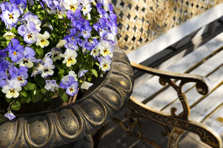 planter: Planter with purple viola pansies and bench