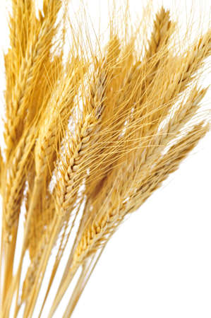 Stalks of golden wheat grain isolated on white background Stock Photo - 4186194