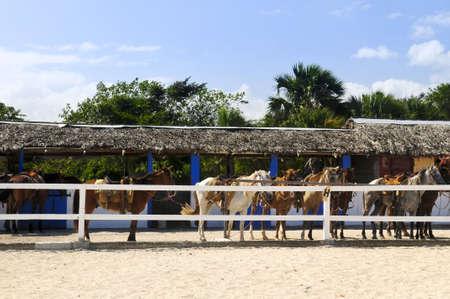 nags: Los caballos listos para ser montado en estable Foto de archivo