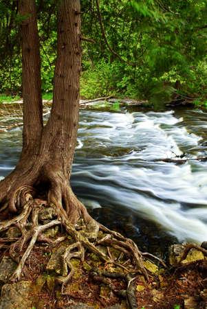 hetzen: Wasser dahinst�rmen vom Baum im Fluss Stromschnellen in Ontario Kanada