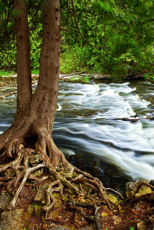 creeks: Water rushing by tree in river rapids in Ontario Canada Stock Photo