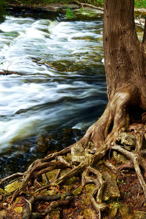 the rapids: Water rushing by tree in river rapids in Ontario Canada Stock Photo