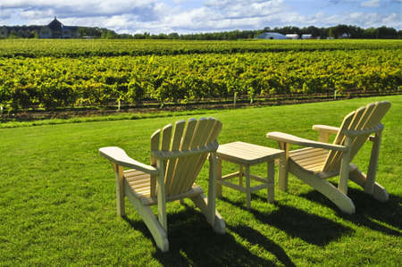 Muskoka chairs and table near vineyard at winery Reklamní fotografie