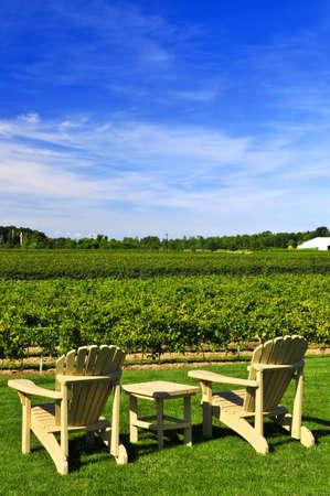 Muskoka chairs and table near vineyard under blue sky photo