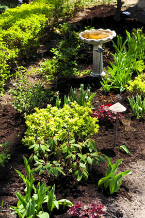 perennial: Spring garden with emerging perennial flowers and plants Stock Photo