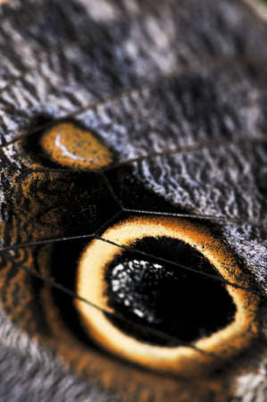 Extreme closeup of owl butterfly wing spots