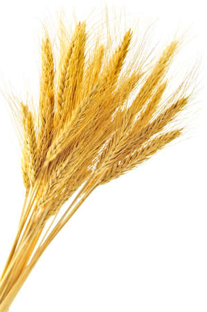 crop  stalks: Stalks of golden wheat grain isolated on white background