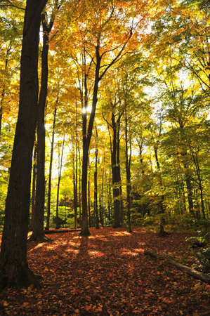 Colorful fall forest on a warm autumn day Stock Photo - 4900405