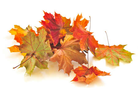 Dry colorful autumn leaves on white background Banco de Imagens - 4900521