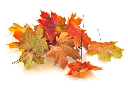 El otoño de hojas secas de colores sobre fondo blanco Foto de archivo