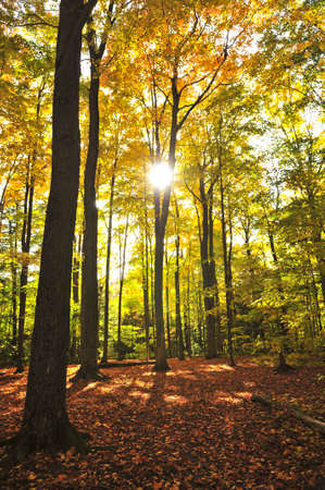Colorful fall forest on a warm autumn day Stock Photo - 4943823