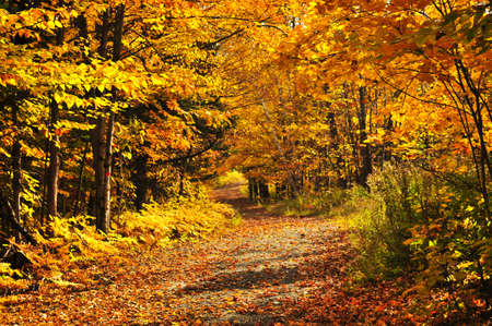 Colorful fall forest on a warm autumn day Stock Photo - 5010667