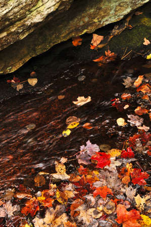 Shore of fall forest with colorful leaves floating in water photo