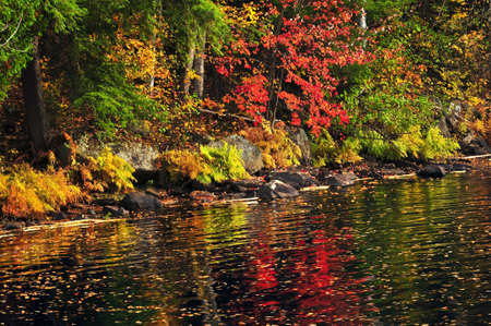 Lake shore of fall forest with colorful reflections photo